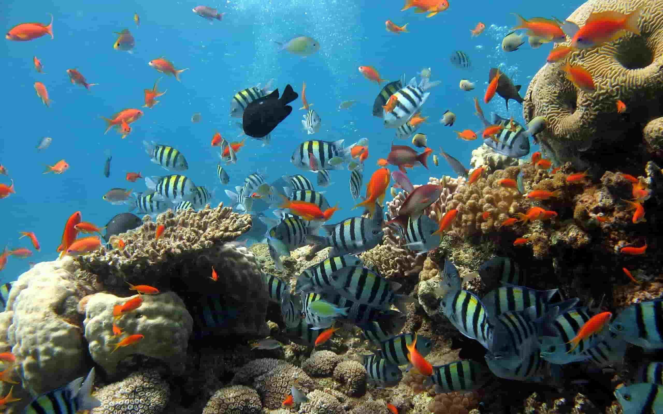 lặn san hô ở phú quốc