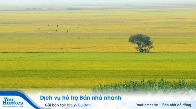 Khi mua bán đất nông nghiệp cần thực hiện đầy đủ các thủ tục để đảm bảo tính pháp lý cho giao dịch.