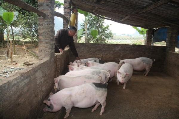 chăn nuôi quy mô hộ gia đình 1