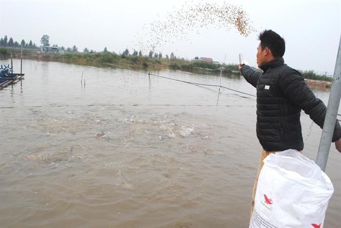 kỹ thuật nuôi cá nheo 1