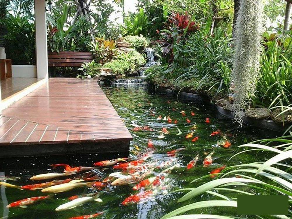 Sự kết hợp hoàn hảo của 1 hồ giữa sân vườn