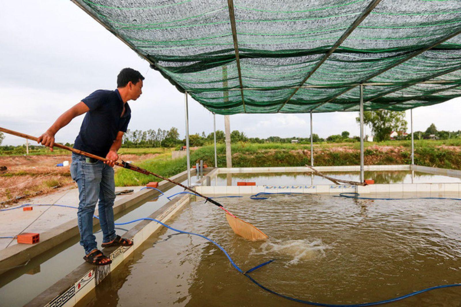 trại cá giống ở tpHCM